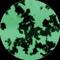 carbon_activo_s02